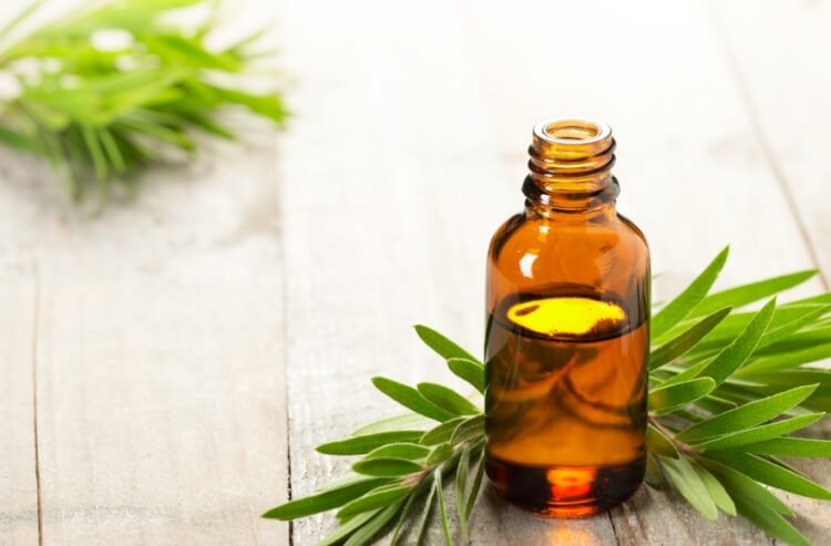 Tinh dầu trà có hiệu quả tốt trong việc điều trị gàu